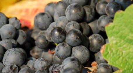 Wein-Gütesiegel soll Nachhaltigkeit belegen