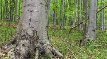Heimische Buchenwälder werden UNESCO-Weltnaturerbe