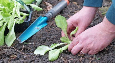 Deutsche Bio-Landwirtschaft boomt
