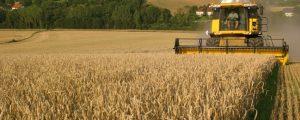 Getreideerträge deutlich unter dem Vorjahr