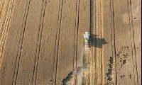 Deutschland rechnet mit gleichbleibender Getreideernte