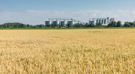 US-Farmer bauten viel weniger Weizen an