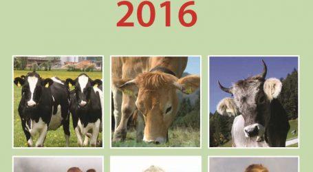 Rinderzucht Austria veröffentlicht Jahresbericht 2016