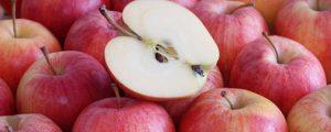 Magere Apfelernte steht ins Haus