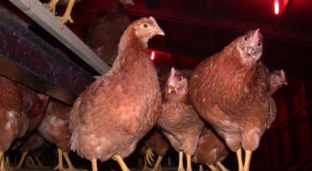 Eier in den Niederlanden mit Fipronil belastet