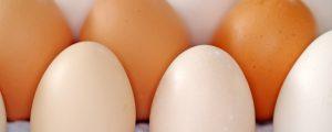AMA: Kein Fipronil in heimischen Eiern
