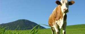 Österreich adaptiert Programm zur Ländlichen Entwicklung