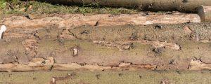 Großflächige Borkenkäferschäden im Mühlviertel