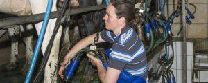 Milch-Rohstoffe tendieren nach oben