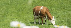 Deutscher Bioanteil steigt von niedrigem Niveau