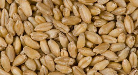 Russland strebt neuen Exportrekord bei Getreide an