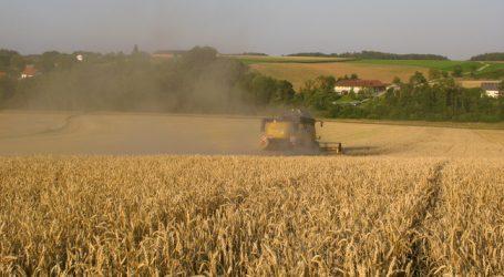 Getreideernte: AMA erwartet – 22 Prozent