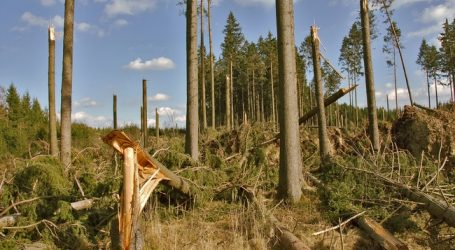 Windbruch in Kärnten und im Ennstal