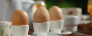 Fipronil-Krise wird deutsche Eierpreise heben