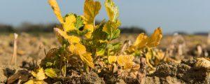 Glyphosat: EFSA schrieb von Monsanto ab