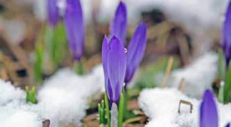 Vorarlberg mit Sonderhilfe bei Frostschäden
