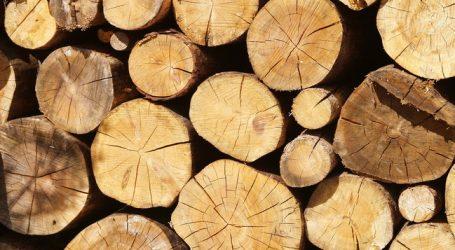 Sägeindustrie und Holzhandel sind zufrieden