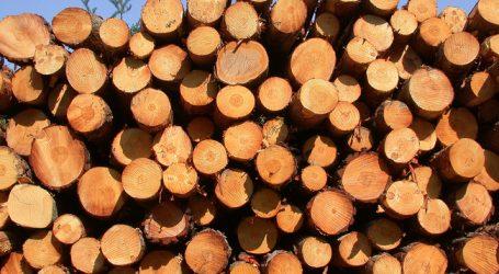 Ausnahmen für Borkenkäferholz auf AMA-Flächen