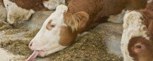 Rindfleisch-Schwenk bei Mercosur-Verhandlungen