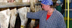 Butter stabilisiert den Milchmarkt