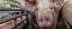 Steiermark will 25 Prozent bio