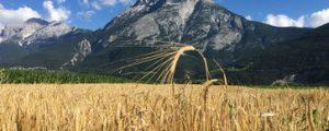 Tirols erste Getreideaufbereitungsanlage