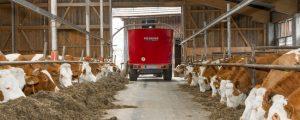 Milchmengen streben auf Rekordniveau