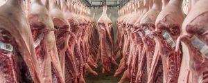 Taiwan öffnet sich für österreichische Schweine