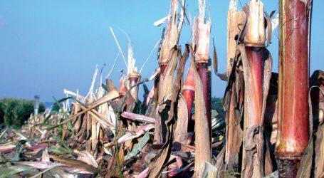 Stoppelmanagement nach Mais