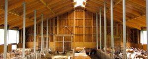 Stallbau für Bio-Rinder