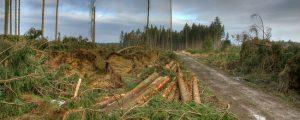 OÖ-Katastrophenfonds zahlt für Sturmschäden