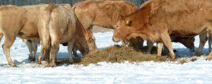 Mercosur: Warnungen vor Rindfleisch-Zugeständnissen
