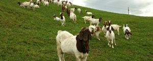 Österreich hat höchsten Bioflächenanteil Europas