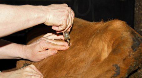 VetMed bestätigt Antibiotika-Einsparungen bei Kühen