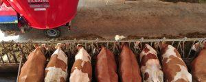 """DBV gegen """"Planwirtschaft im Milchsektor"""""""