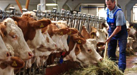 Rinderzahl stabil, aber Anzahl der Betriebe sinkt