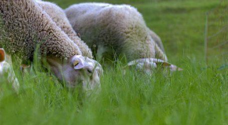 Diversifizierung soll Salzburger Landwirtschaft stärken