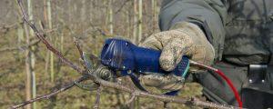 Steirische Apfelbäume brauchen Bewässerung