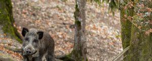 Oberösterreich erlaubt Jagdprüfung mit 16 Jahren