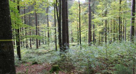 1.000 Euro Verlust pro Fuhre Holz