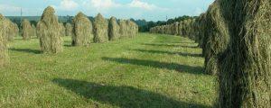 Landwirtschaftskammer Kärnten beschließt Strukturreform