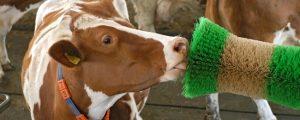 Jungbauern wollen Tierwohl erklären