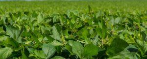 Experten sehen GAP-Vorschlag als Chance für Bauern