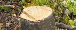 Kärnten: Föhnsturm-Schäden halten sich in Grenzen