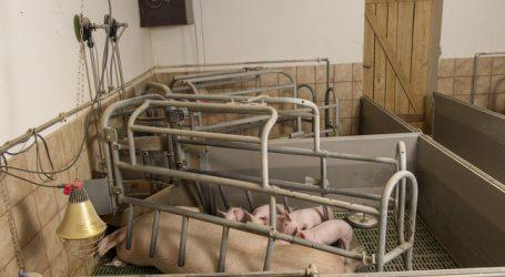 Gastkommentar: Nutztierhaltung – wohin gehst du?