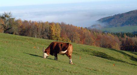Raubwild: Benger warnt vor leeren Almen