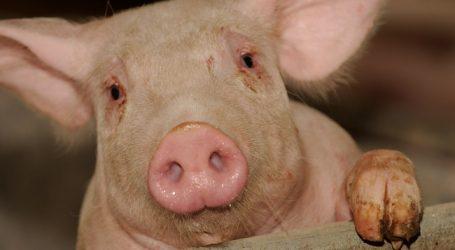 Produktionswachstum bei Schweinefleisch gedämpft