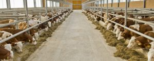 Mercosur könnte Bauern 7 Mrd. Euro kosten