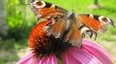 EU möchte mehr zu Insektenrückgang wissen