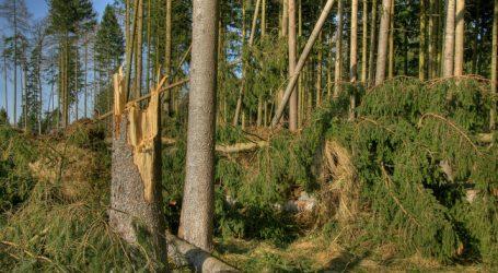 Kärnten verdoppelt nach Stürmen sein Forstbudget